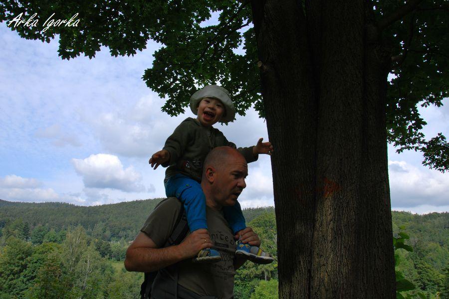 przesieka drzewo