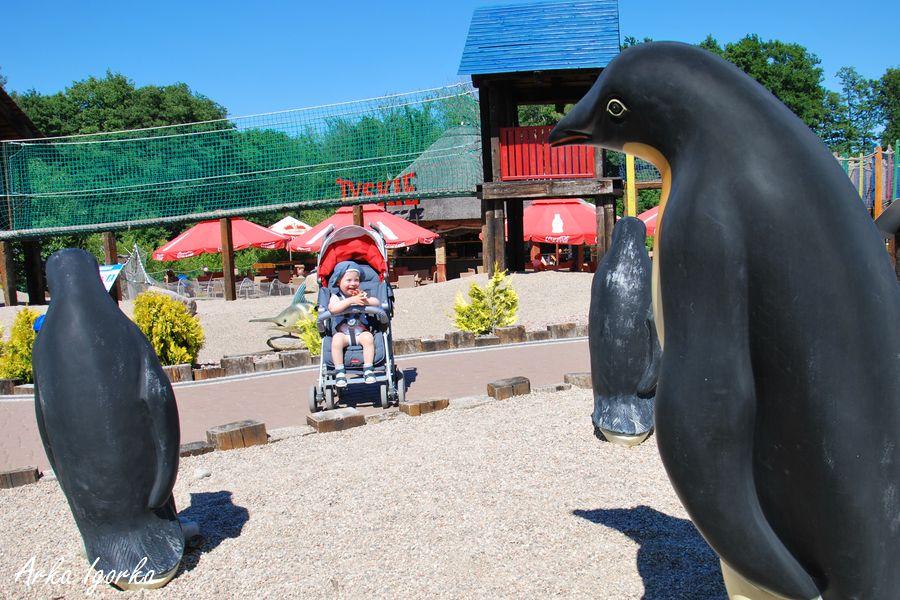 sea park pingwin 1